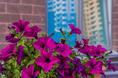 Жилой комплекс «Капитал» представлен на конкурсе «Среда обитания» - Строительный трест - фото №4