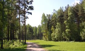 Лесной парк ЖК Пляж